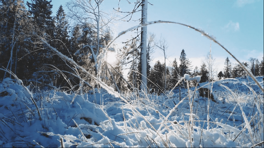 "Nokia's cinematic ability is back! ""First Snow"" was shot with the Nokia 8 in 4K with OZO Audio"